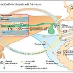 Biotransformación: Qué es y cómo actúa