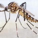 Dengue: aumentan las preocupaciones cuando el clima es cálido