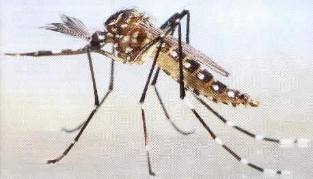 Clima Dengue