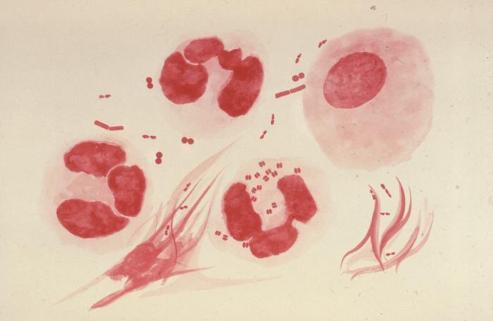 Virus de Gonorrea