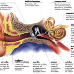 Una enfermedad común: la otitis