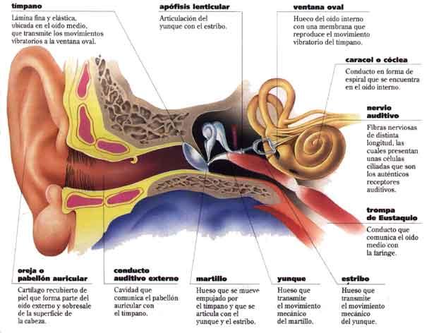 Una enfermedad común: otitis