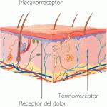 Absorción de tóxicos por la piel