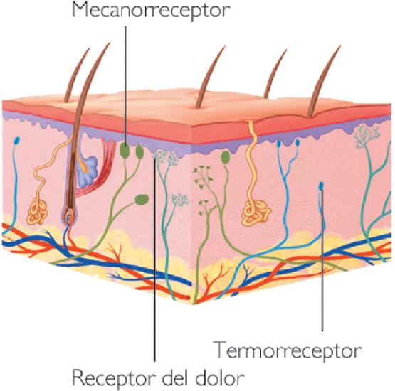 Tóxicos piel